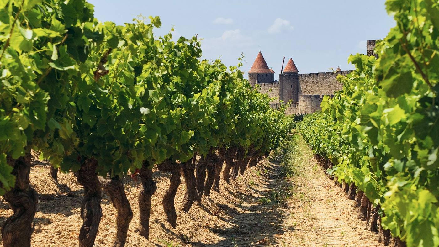 Les vignes du Chateau