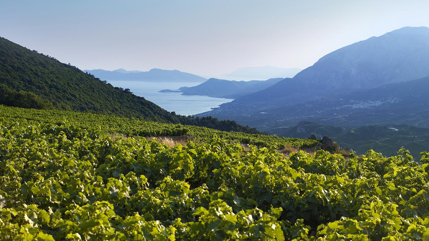 Les vignobles de Muscat de l'île de Samos